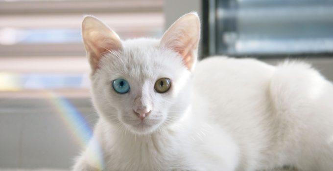 cat-1092371_1280