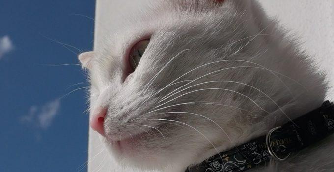 cat-550504_1280