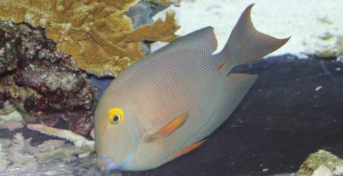 fish-926998_1280